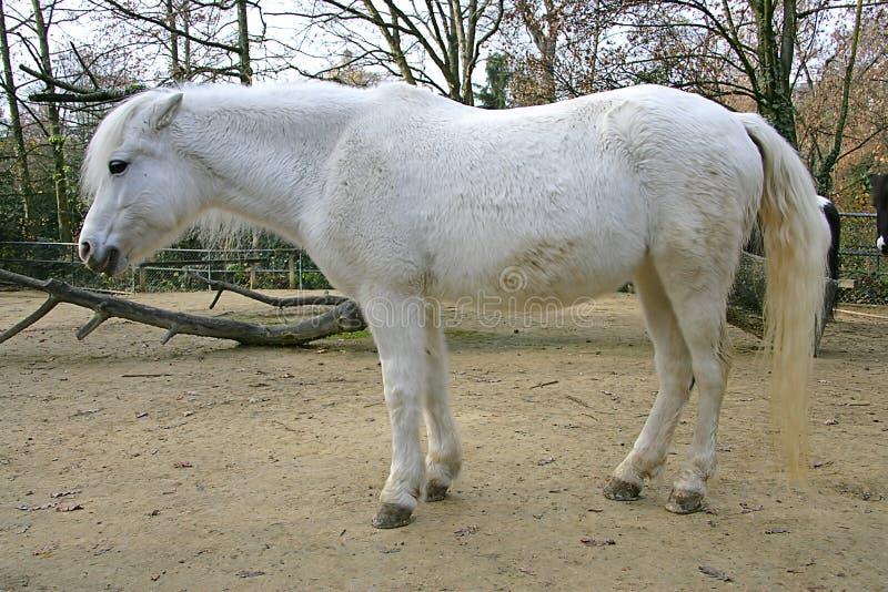 Pony 1 stockfoto