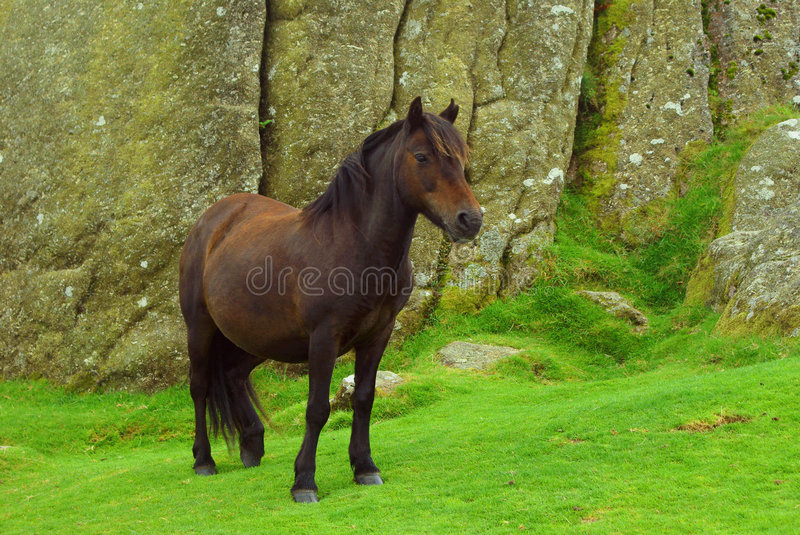 The Pony royalty free stock images