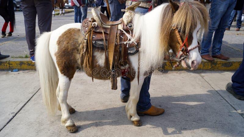 pony lizenzfreie stockfotos