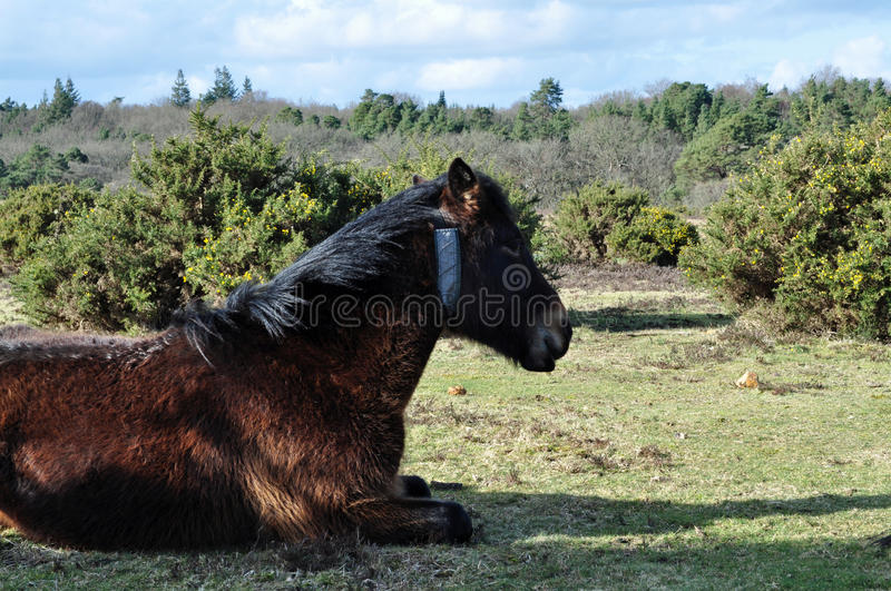 Download Pony amidst bracken stock photo. Image of outdoors, grass - 38479720