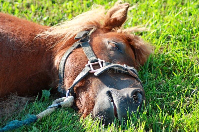 Pony, das auf dem Gras stillsteht lizenzfreies stockbild