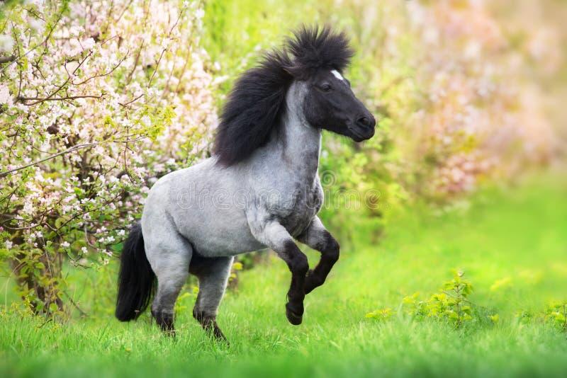Pony, das oben aufrichtet lizenzfreie stockfotografie