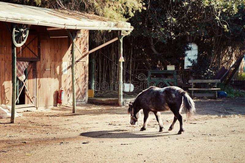 Pony, das in Richtung zum Bauernhof geht lizenzfreie stockfotografie