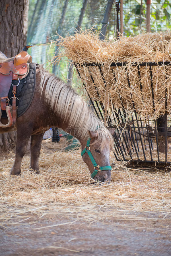 Pony. Pony eats hay in national park royalty free stock images