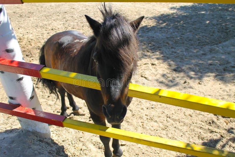 Pony in einer Koppel lizenzfreie stockbilder
