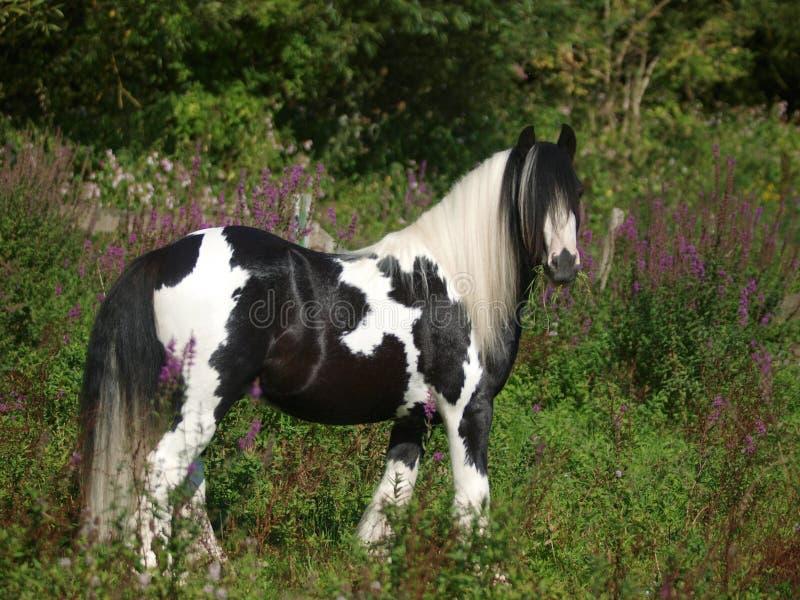Pony In Flowers fotografia de stock royalty free