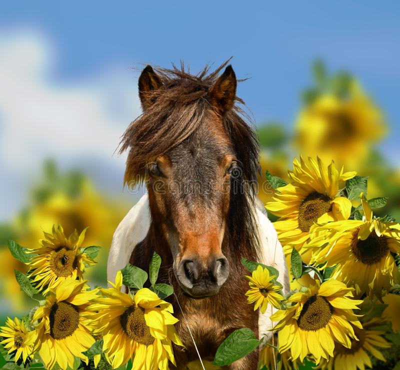 Pony horse head portrait with wildflowers meadow and blue sky stock photos