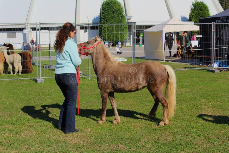 Pony at a horse show in Austria stock photos