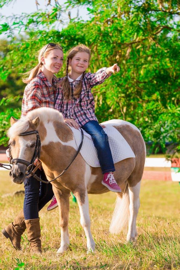 pony landschaft Sommer lizenzfreies stockbild