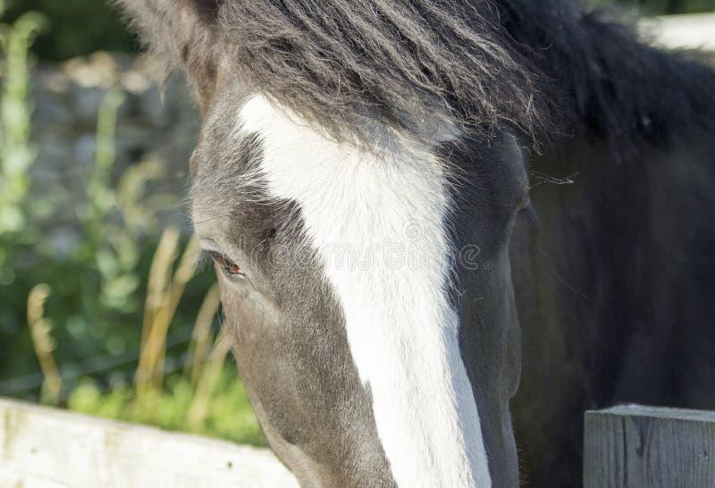 Pony Looking över ett staket arkivbild