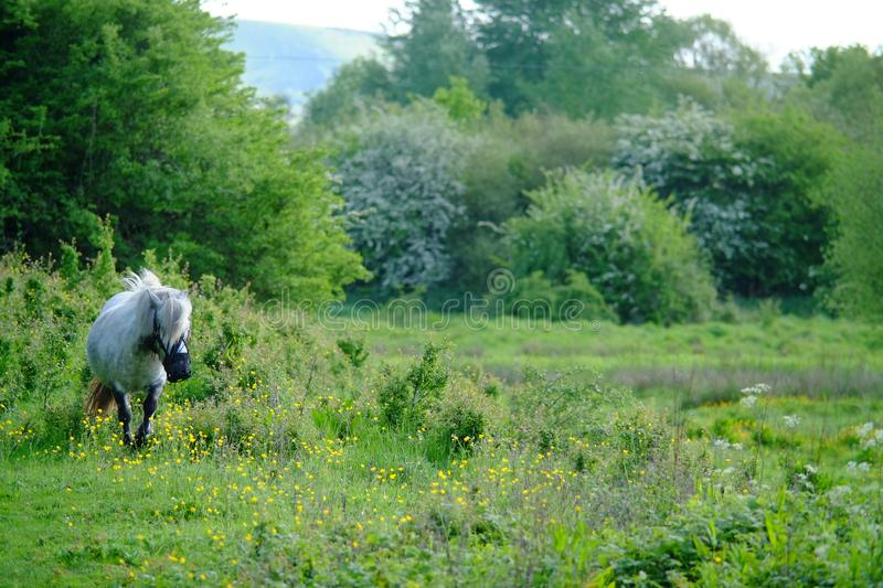 Pony In Meadow photographie stock