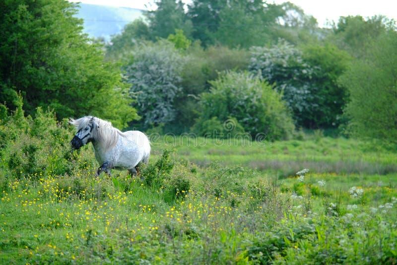 Pony in meadow stock photo