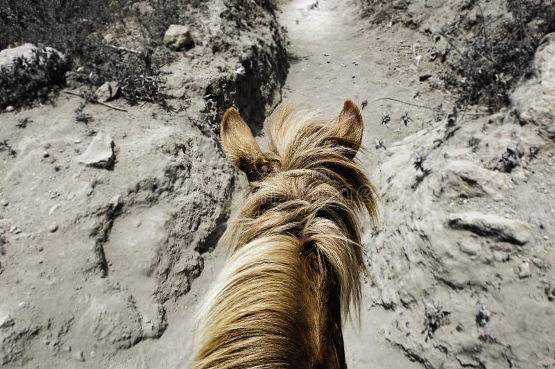 Pony Ride imagen de archivo libre de regalías