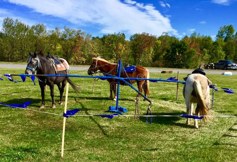 Pony ride at fall festival in Maine stock image