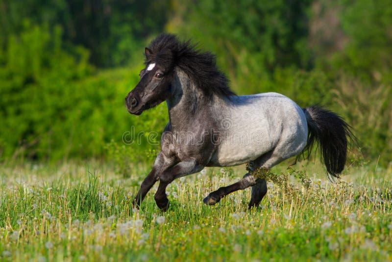 Pony schnell laufen gelassen lizenzfreie stockbilder