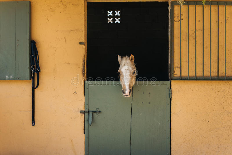 Pony in stable royalty free stock photography