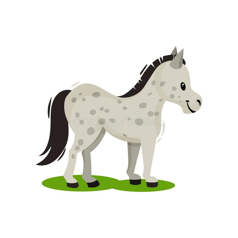 Free Pony Standing On Green Grass Side View. Gray Spotted Horse With Black Mane And Tail. Mammal Animal. Flat Vector Icon Stock Image - 139347751