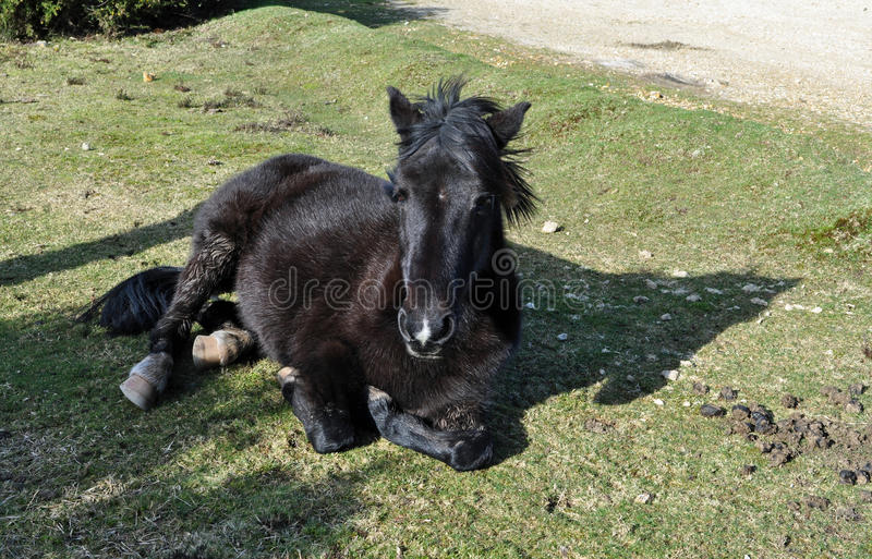 Download Pony taking a nap stock image. Image of horse, spring - 38479869