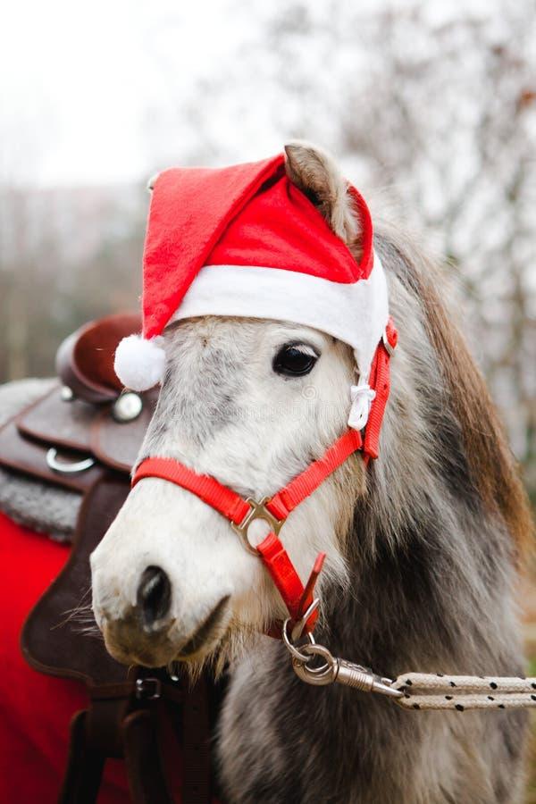 Pony in Weihnachtsmanns roter Schale - Weihnachtspferd stockbilder