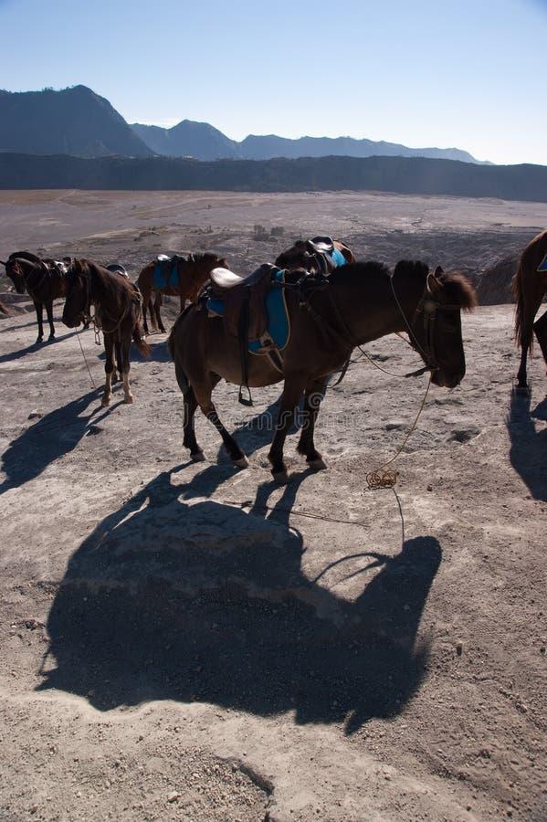 Ponypferd lizenzfreies stockfoto