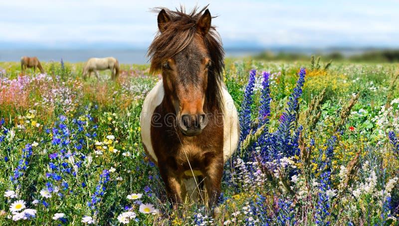 Ponypferdekopfporträt mit Wildflowerswiese und blauem Himmel lizenzfreies stockbild