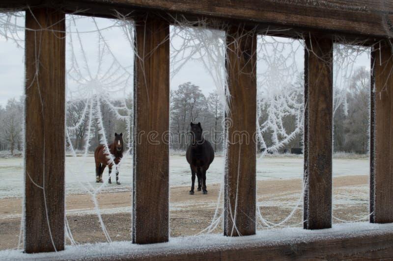 Ponys durch die Hefe-Tür lizenzfreies stockbild