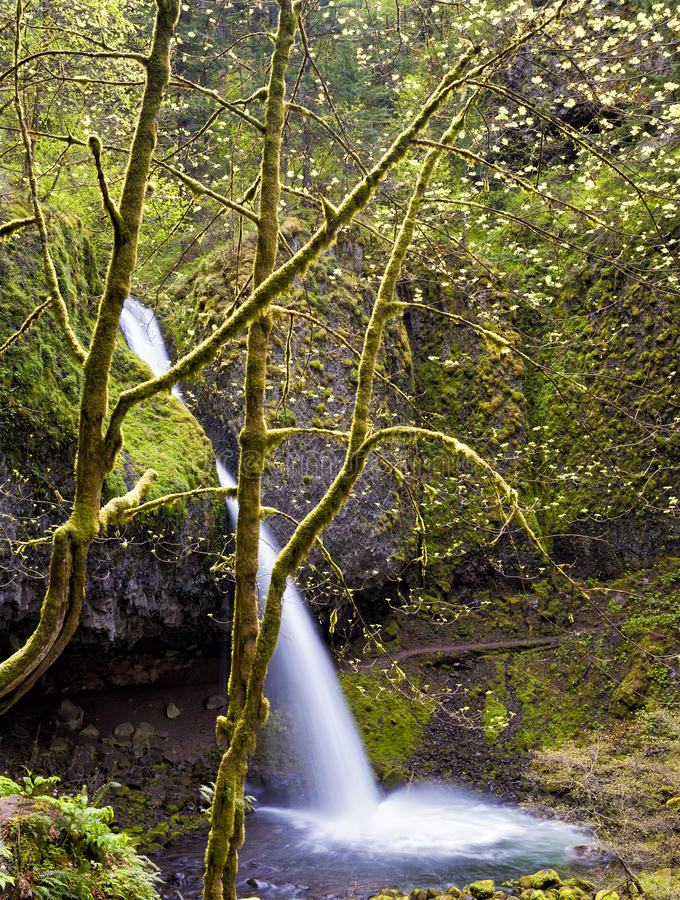 Ponytail Falls in Columbia River Gorge. Columbia River Gorge Ponytail falls in the spring stock photography