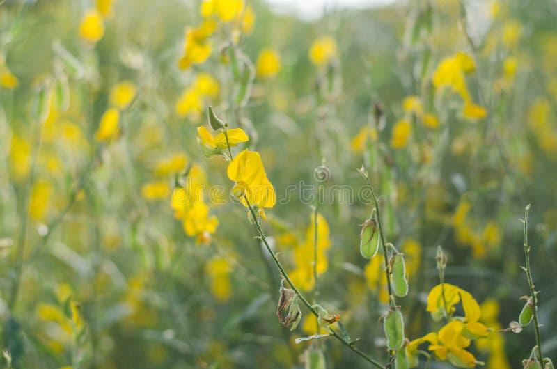 Poo是绿色叶子的黄色叶子是自然地美丽的 库存照片