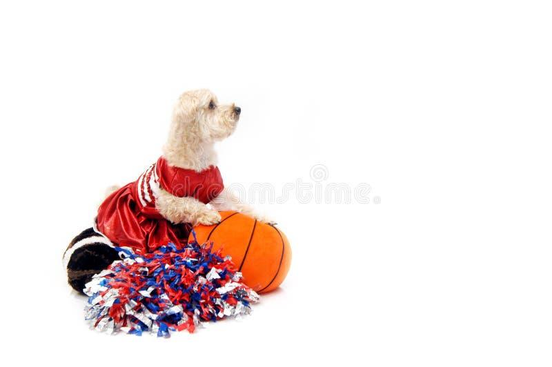 poo koszykówki poo zdjęcia royalty free