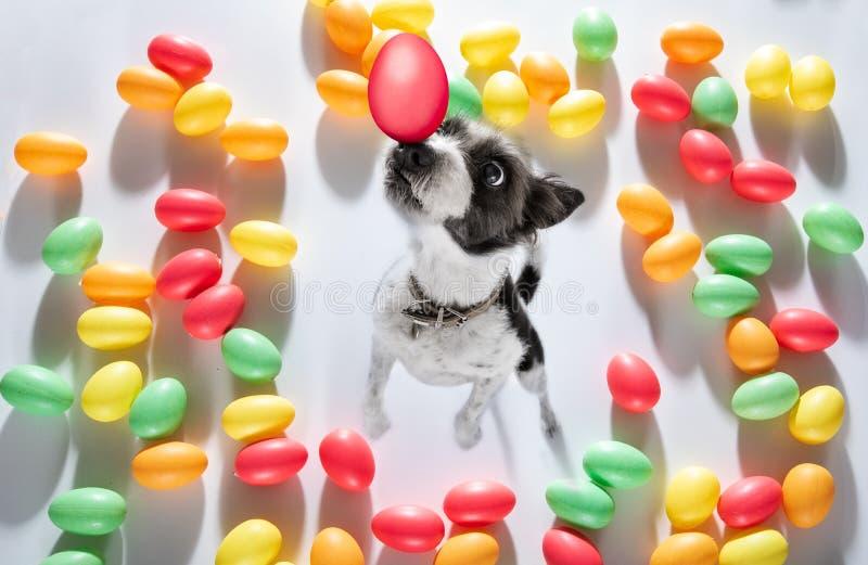 Σκυλί λαγουδάκι Πάσχας στοκ φωτογραφίες