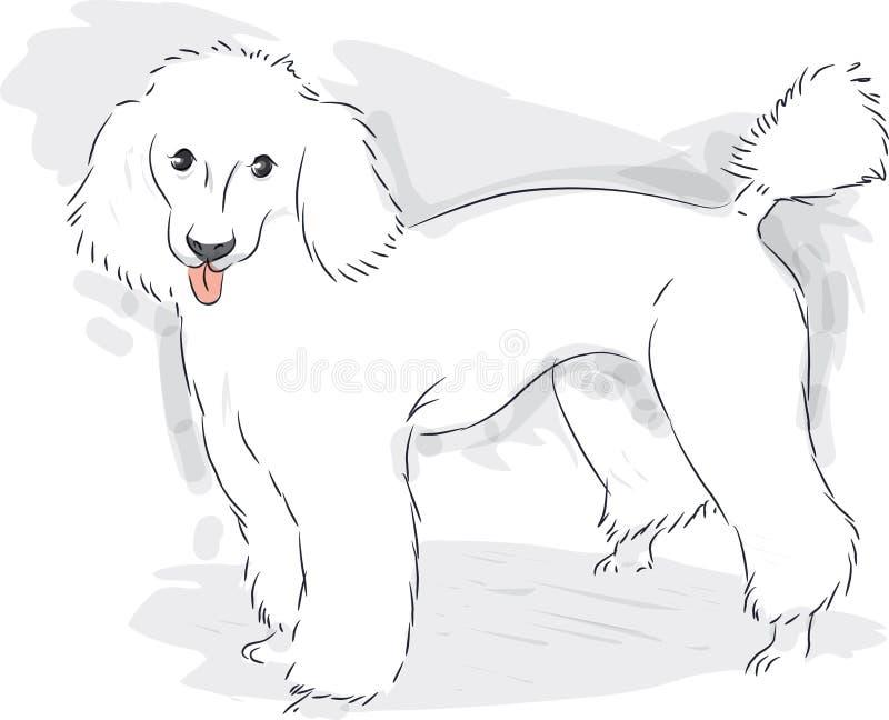 poodle ilustração royalty free