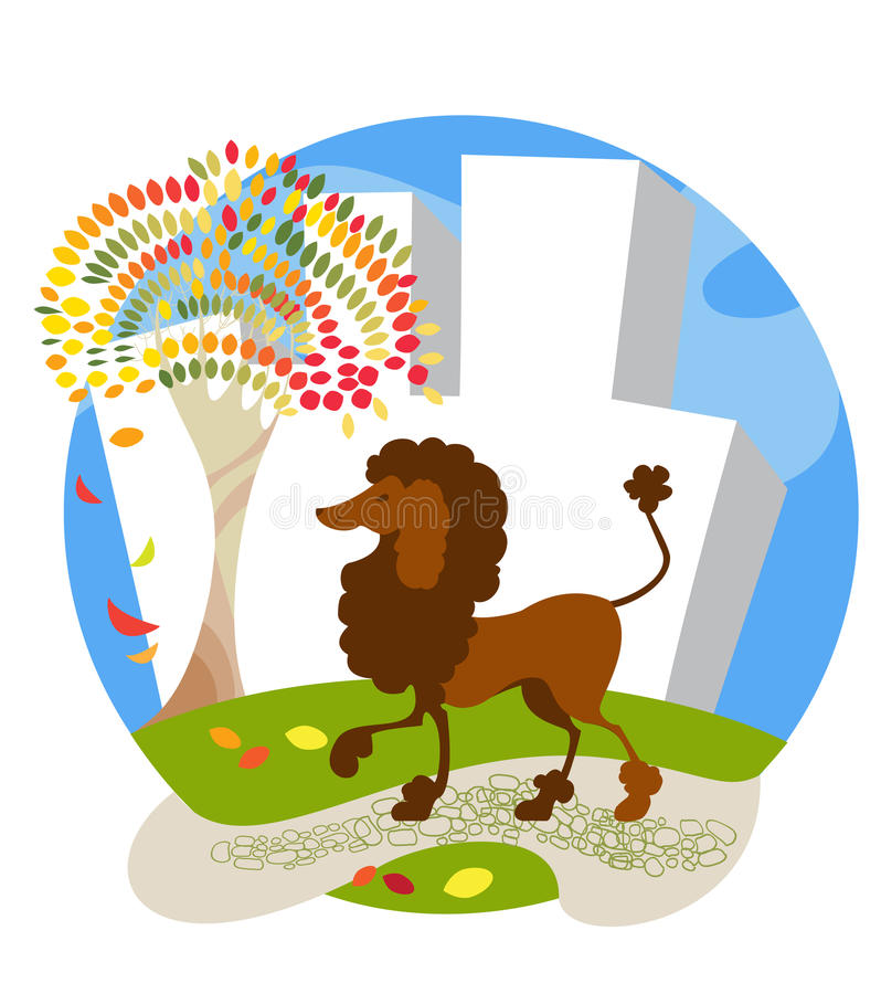 Poodle royalty free illustration