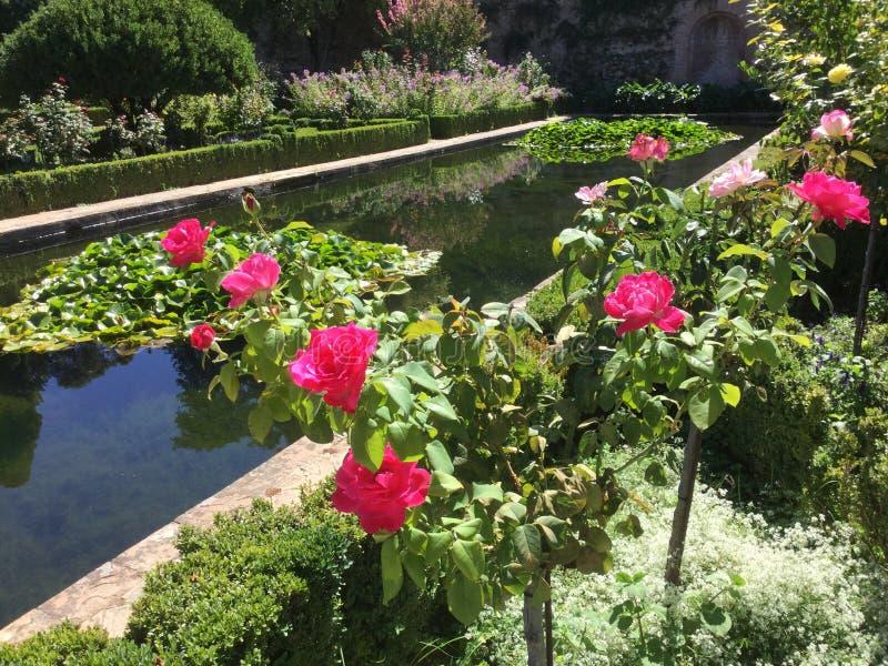 Pool di riflessione e rose sull'Alhambra in Granada Spagna immagini stock libere da diritti