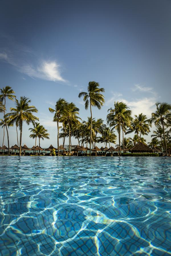 Pool mit Palmen nahe dem Ozean während eines schönen Sonnenuntergangs stockbilder