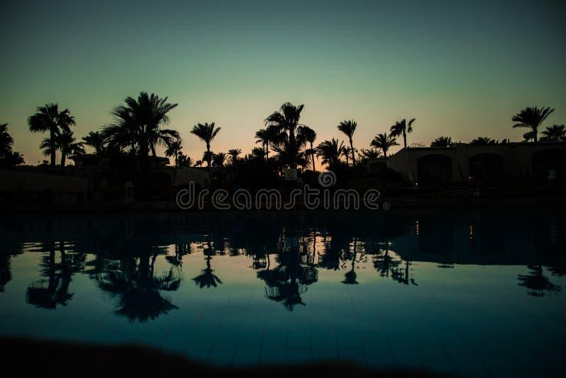 Pool mit Palmen nahe dem Ozean während eines schönen Sonnenuntergangs Sommerberufung stockbilder