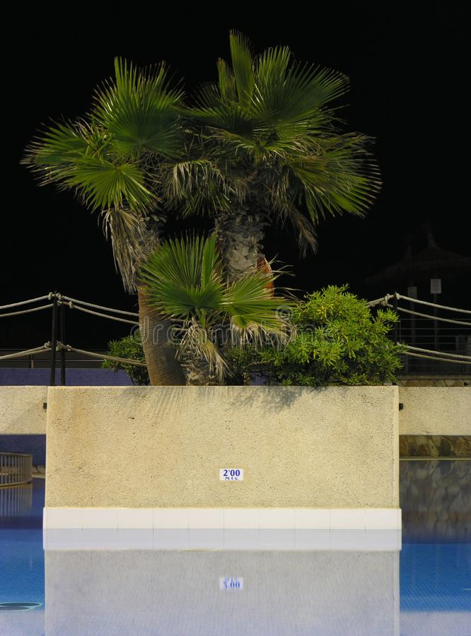 Pool Palms Stock Images