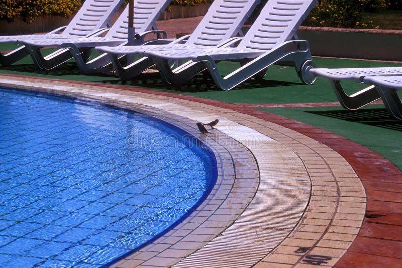 Pool resort stock photography