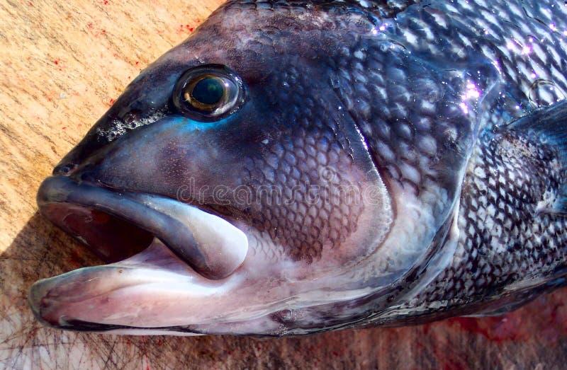 Download Pool-Sieger stockfoto. Bild von öffnung, trophäe, pool, fischen - 26716