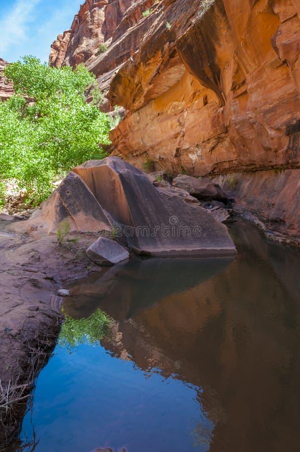 Pool van water - Hunter Canyon Hiking Trail Moab Utah royalty-vrije stock foto's