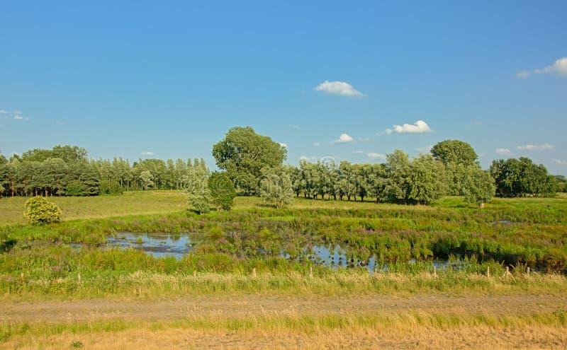 Pool in a wetland landscape trees in Kalkense Meersen nature reerve, Flanders, Belgium. Pool in a marsh landscape with reed and trees in Kalkense Meersen nature stock photo