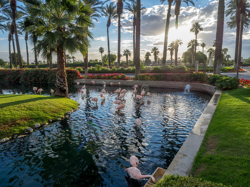 Pools at the JW Marriott Desert Springs royalty free stock photo