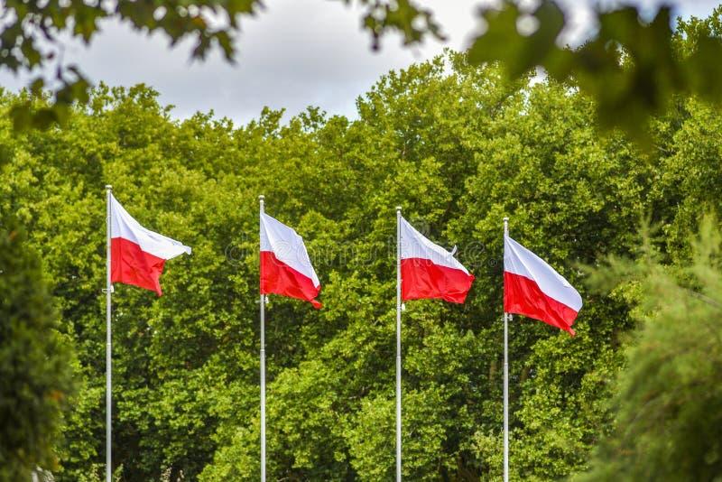 Poolse vlaggen op de mast die tegen de achtergrond van RT fladderen royalty-vrije stock foto