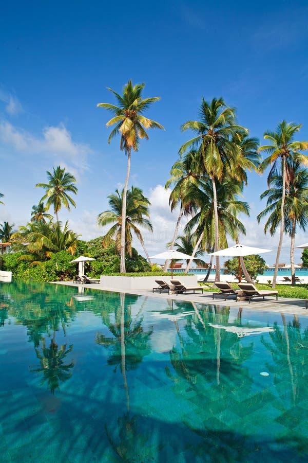 Download Poolside No Console Tropical Foto de Stock - Imagem de marinha, palmas: 16850008
