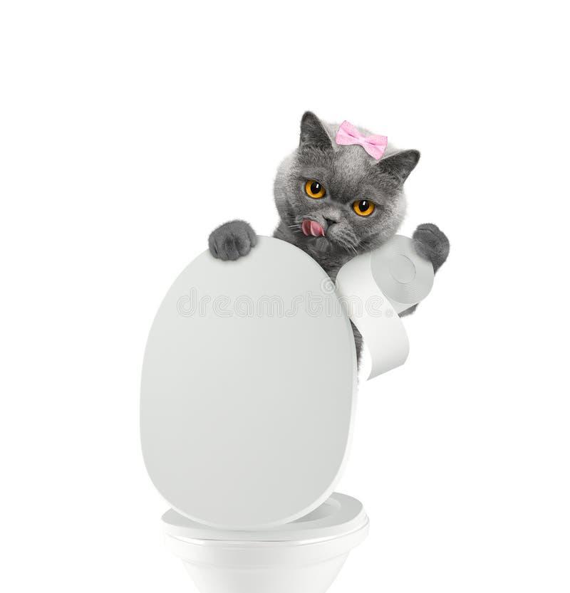 pooping入洗手间的逗人喜爱的猫 免版税库存照片