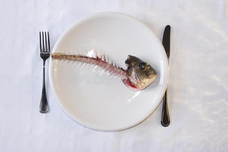 Poor dinner. An isolated white plate with the skeleton of a fish over it,concept for a poor dinner stock photography