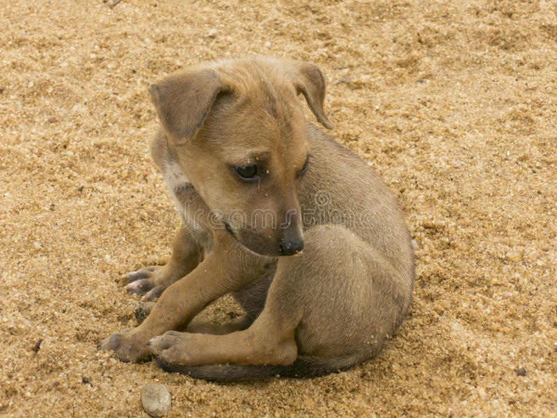 Poor dog abendoned in a sand. Poor small dog abendoned in a sand stock image