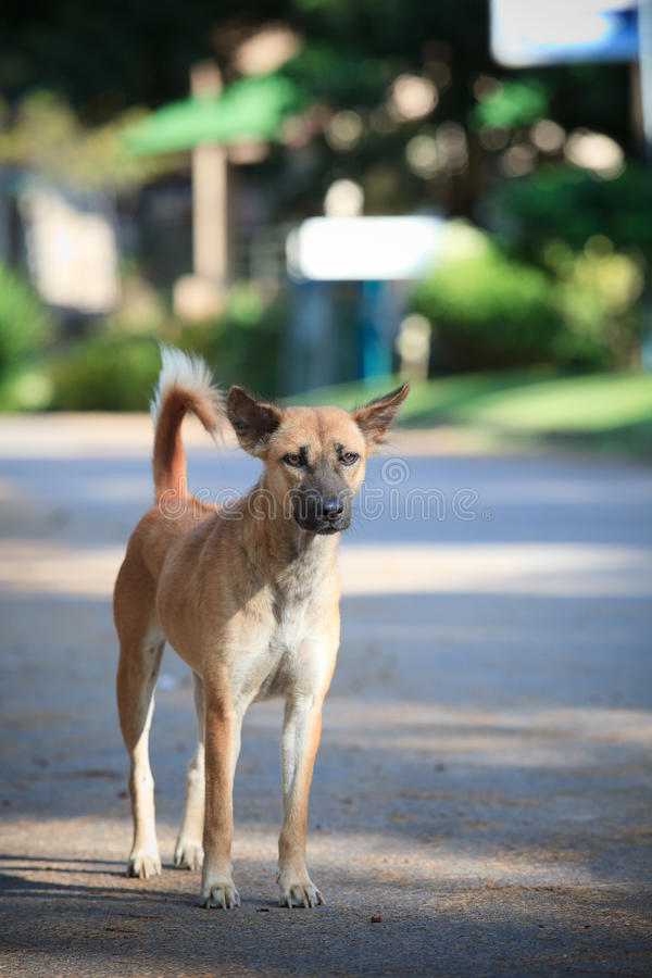 Poor Dog Standing On Natural Ground Stock Image
