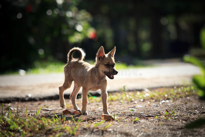 Download Poor Dog Standing On Soil Ground Stock Image - Image: 27415373