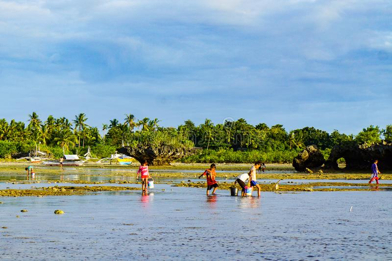 Poor Filipinos children collect mollusks and crustaceans for sale and for dinner. Olango, Philippines — October 2018: poor Filipinos children collect stock images