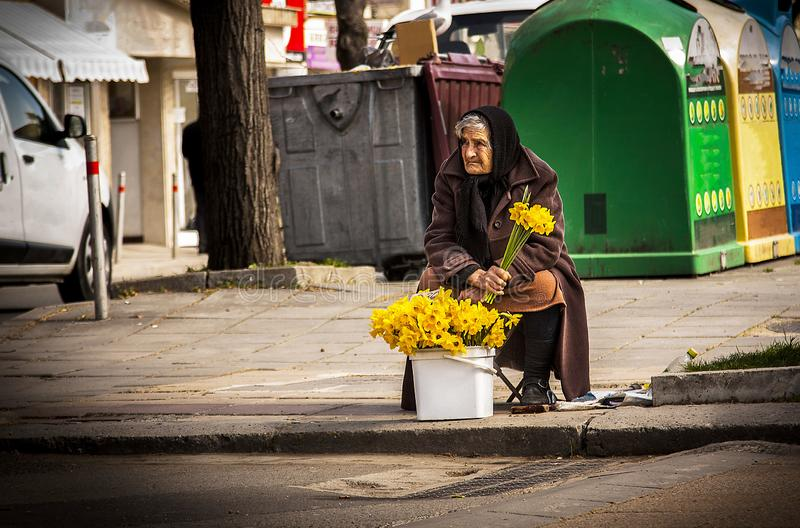 Poor homeless old woman sells flowers on the street in an attempt to pursue in Burgas/Bulgaria/03/08/2016. Editorial use only. Street trading by an elderly stock photography